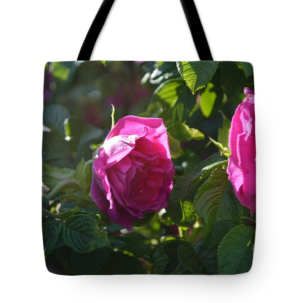 Roses At Sunrise Tote Bag by Alys Caviness-Gober