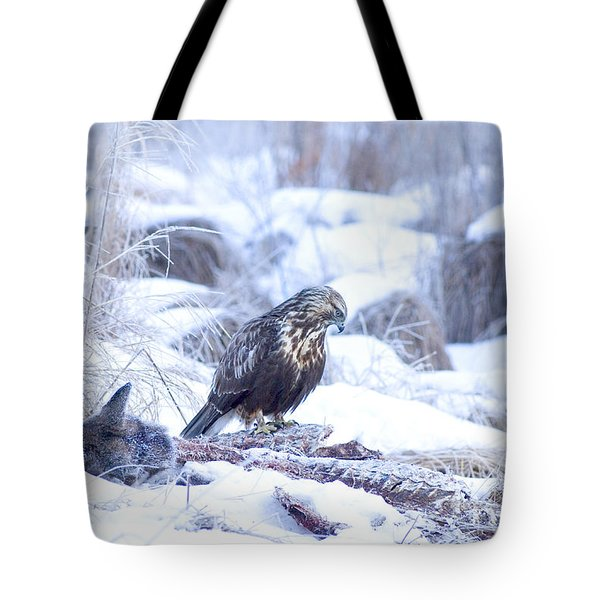 Rough Legged Hawk On Deer Carcass Tote Bag by Gregory K Scott