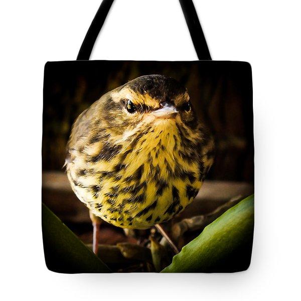 Round Warbler Tote Bag by Karen Wiles
