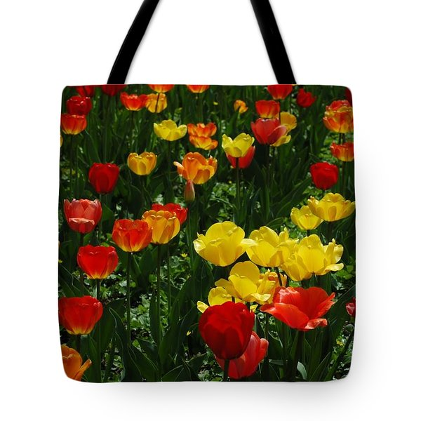 Rows Of Tulips Tote Bag by Kathleen Struckle
