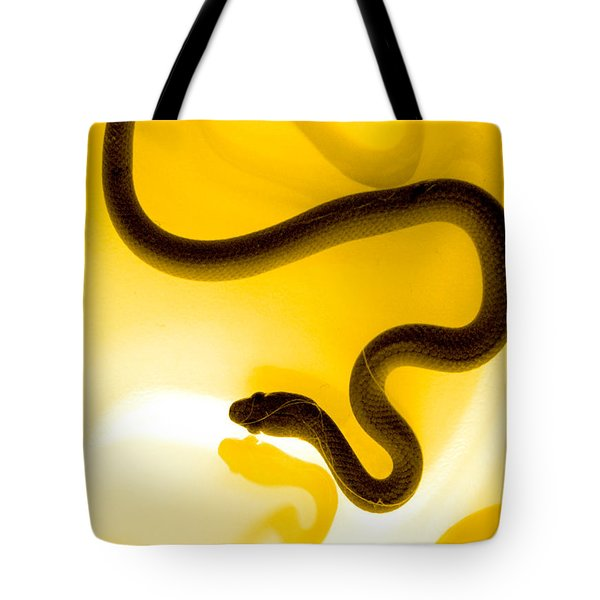 S Tote Bag by Holly Kempe