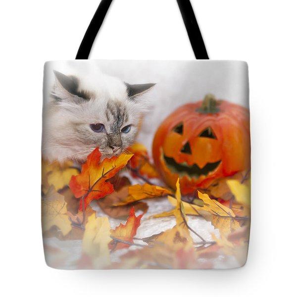 Sacred Cat Of Burma Halloween Tote Bag by Melanie Viola
