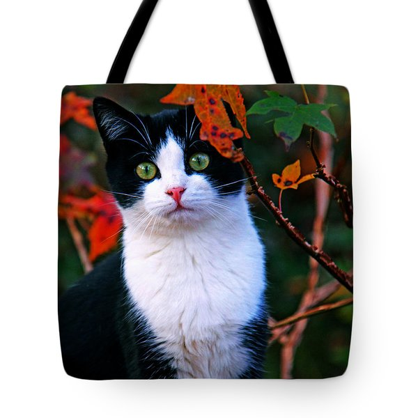 Salem Tote Bag by Andy Lawless