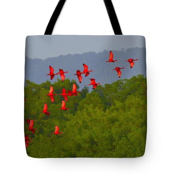Scarlet Ibis Tote Bag by Tony Beck