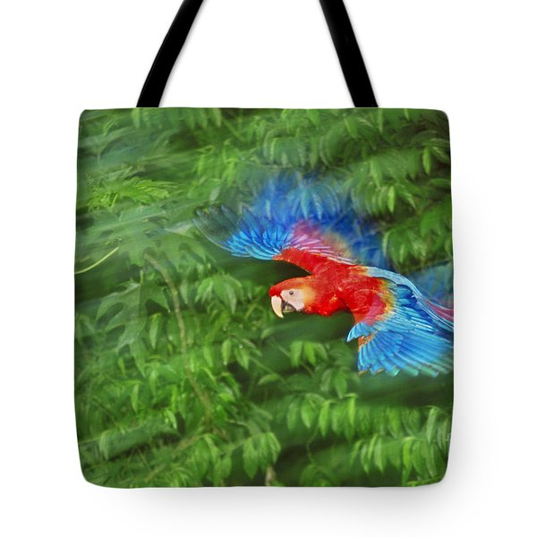 Scarlet Macaw Juvenile In Flight Tote Bag by Frans Lanting MINT Images