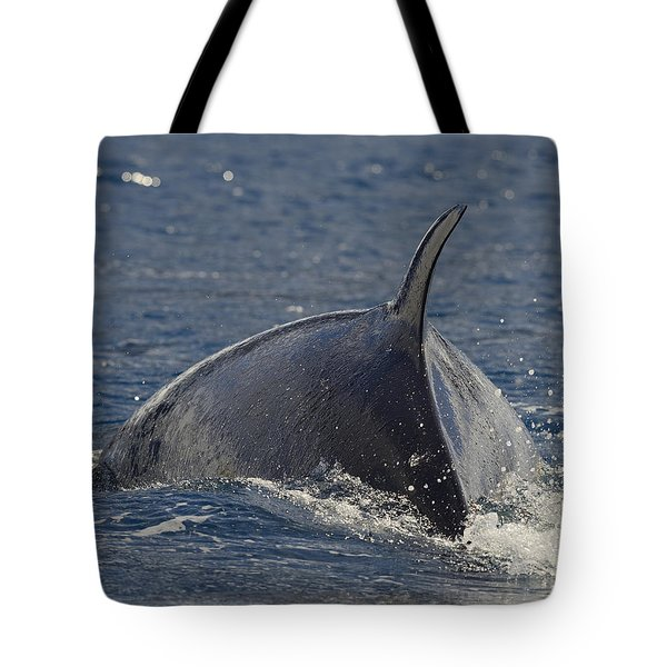 Scratching The Surface Tote Bag by Tony Beck