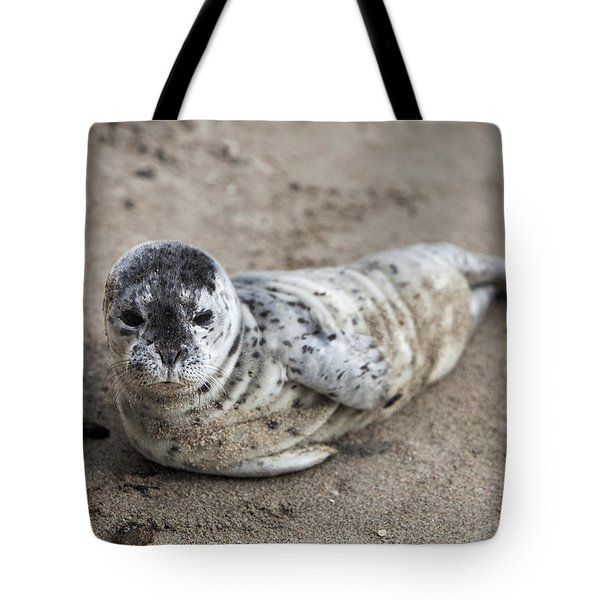 Seal Baby Tote Bag by David Millenheft