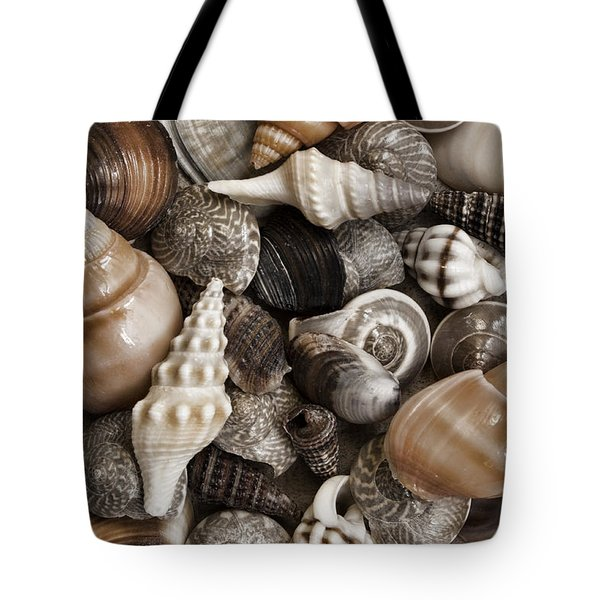 Seashells On The Beach Tote Bag by Carol Leigh