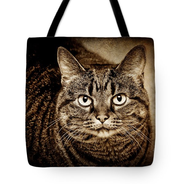 Serious Tabby Cat Tote Bag by Andee Design