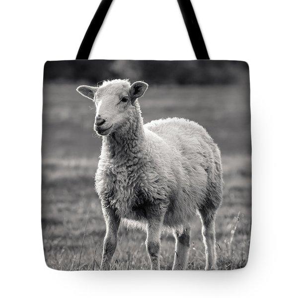Sheep Art  Tote Bag by Lucid Mood