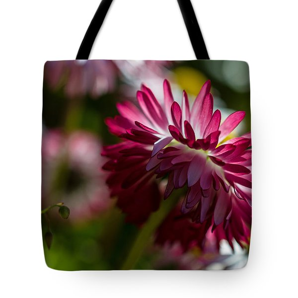 Shy Mum - Chrysanthemum Tote Bag by Jordan Blackstone