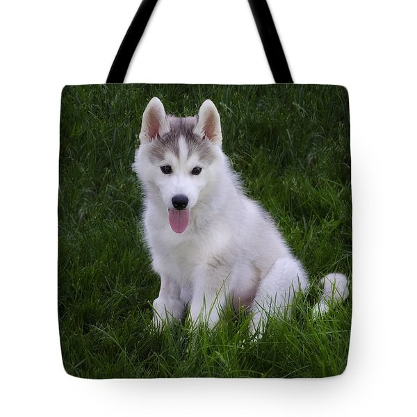 Siberian Huskie Pup Tote Bag by Bill Cannon