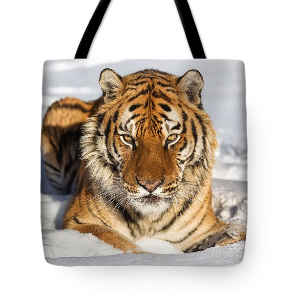 Siberian Tiger Face To Face Tote Bag by Jerry Fornarotto