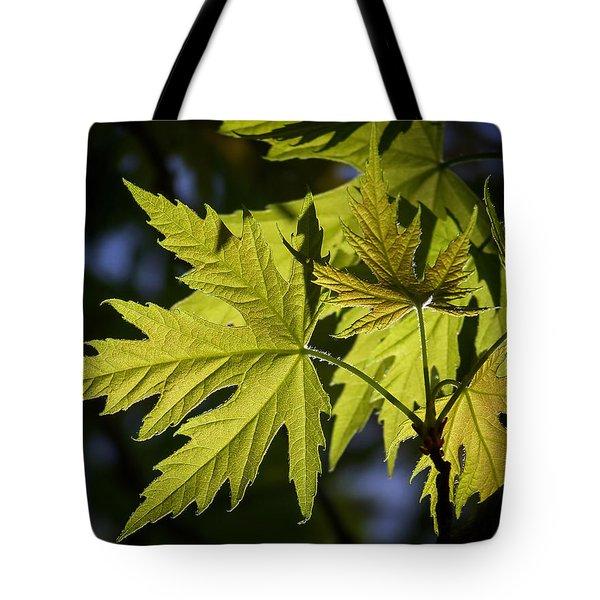 Silver Maple Tote Bag by Ernie Echols