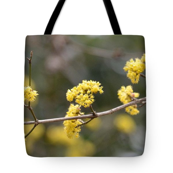 Silver Wattle In Spring Tote Bag by Maria Urso