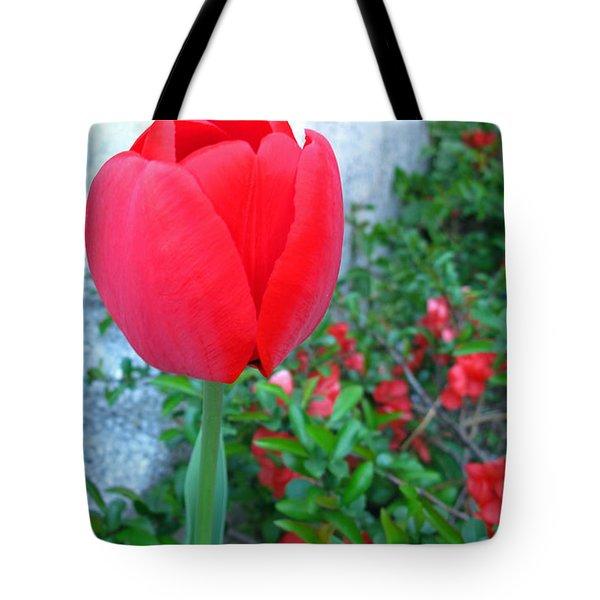 Single Red Tulip Tote Bag by Barbara McDevitt