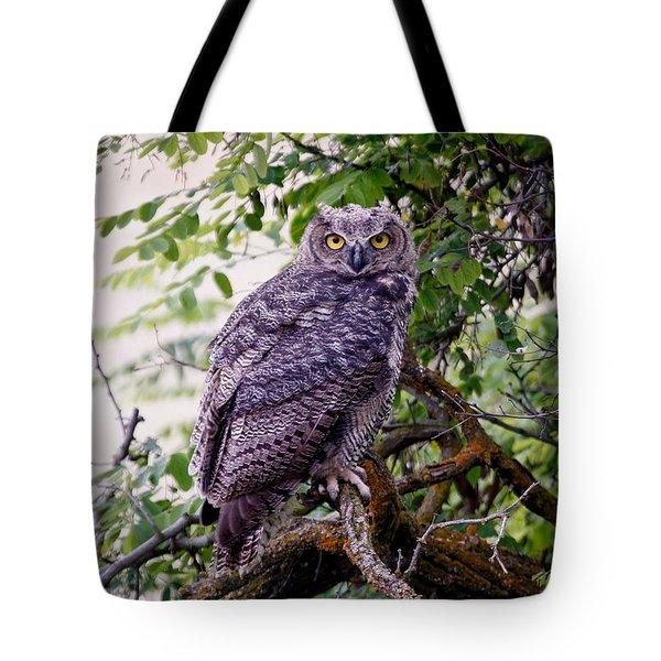 Sitting Owl Tote Bag by Athena Mckinzie