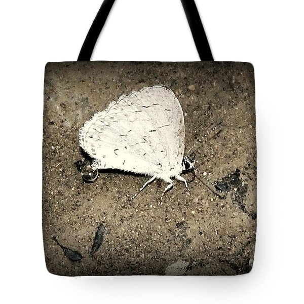 Small Wonder Tote Bag by Tami Quigley