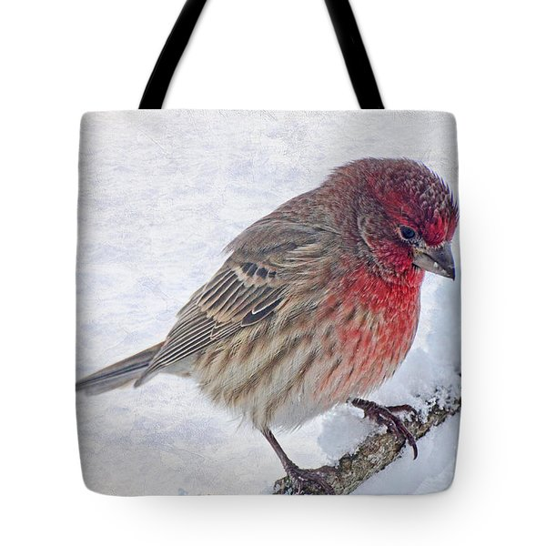Snowy Day Housefinch Tote Bag by Debbie Portwood