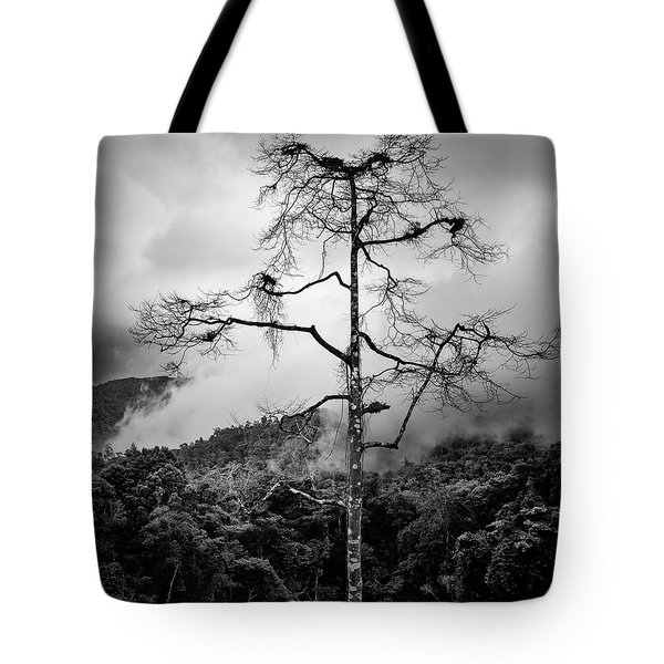 Solitary Tree Tote Bag by Dave Bowman