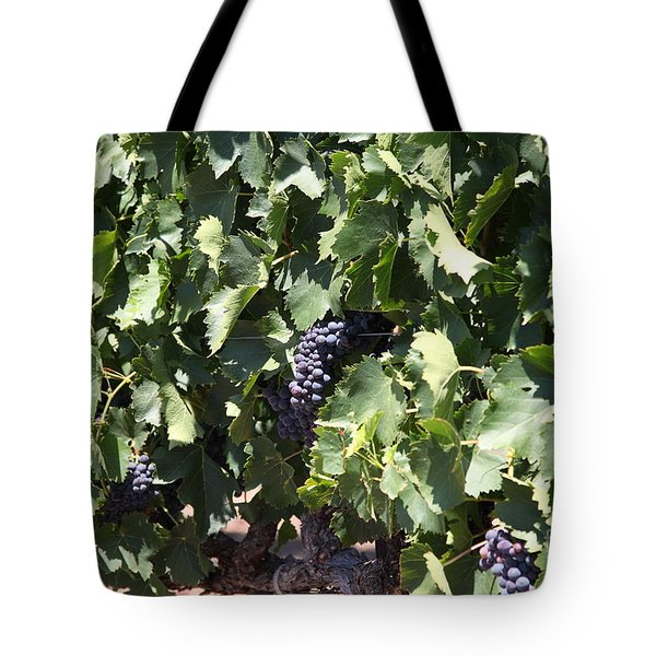 Sonoma Vineyards In The Sonoma California Wine Country 5d24489 Tote Bag by Wingsdomain Art and Photography