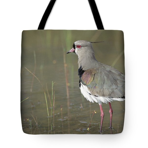 Southern Lapwing In Marshland Pantanal Tote Bag by Tui De Roy