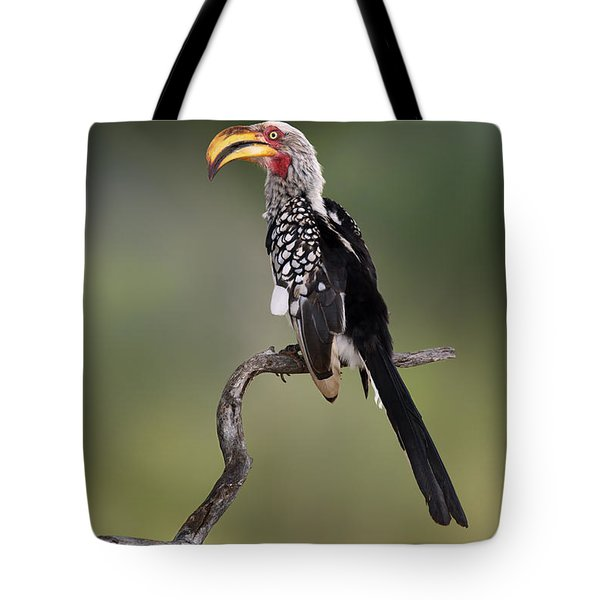Southern Yellowbilled Hornbill Tote Bag by Johan Swanepoel