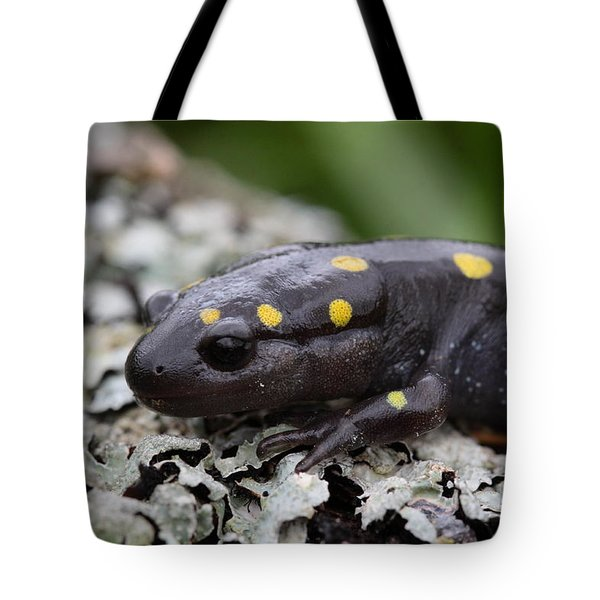 Spotted Salamander Tote Bag by Bruce J Robinson