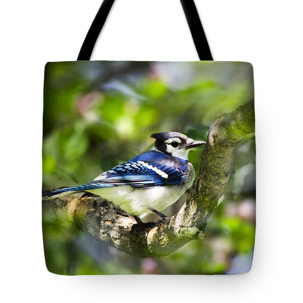 Spring Blue Jay Tote Bag by Christina Rollo
