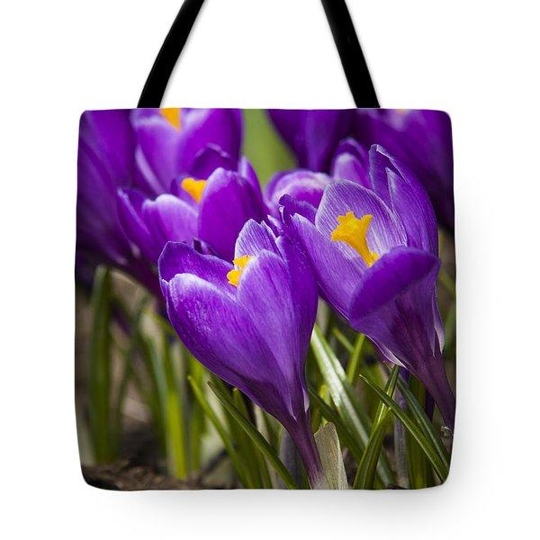 Spring Crocus Bloom Tote Bag by Adam Romanowicz