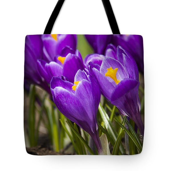 Spring Crocus Bloom Tote Bag by Adam Romanowicz