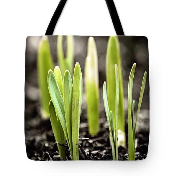 Spring shoots Tote Bag by Elena Elisseeva