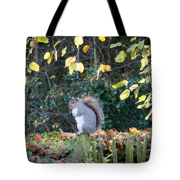 Squirrel Perched Tote Bag by Matt Malloy