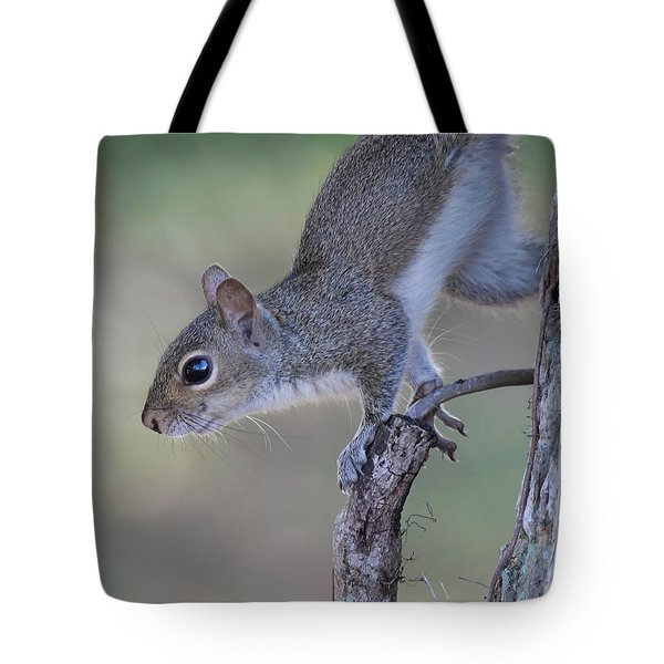 Squirrel Pose Tote Bag by Deborah Benoit