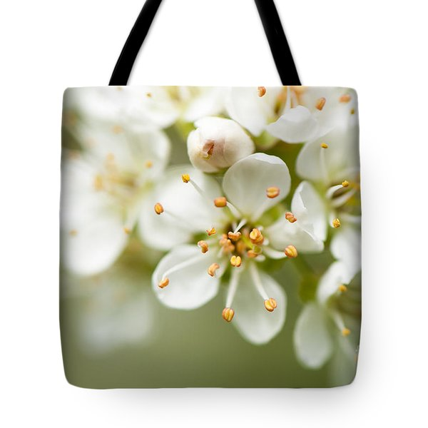 St Lucie Cherry Blossom Tote Bag by Anne Gilbert