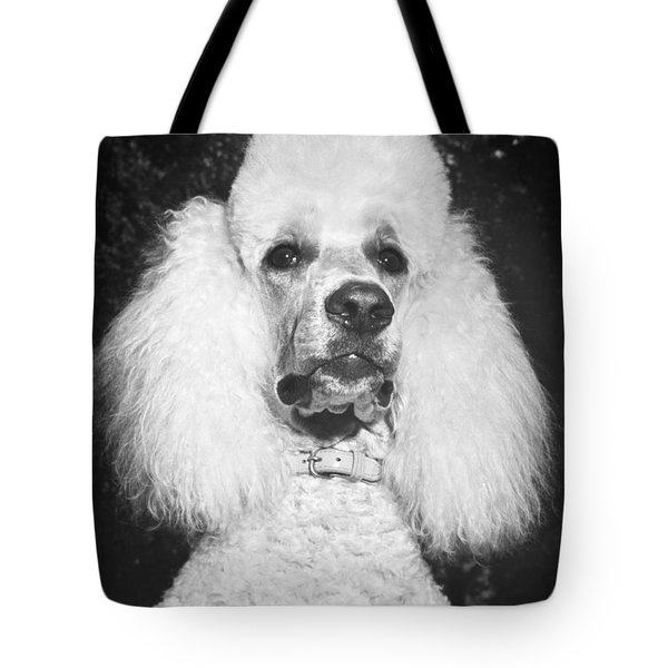 Standard Poodle Tote Bag by ME Browning