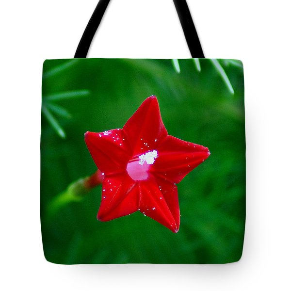 Star Glory Tote Bag by Kim Pate