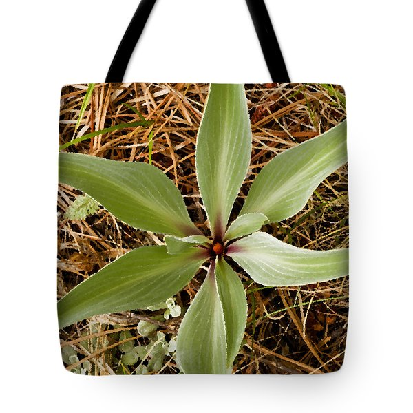 Starfish Plant Tote Bag by Rich Franco