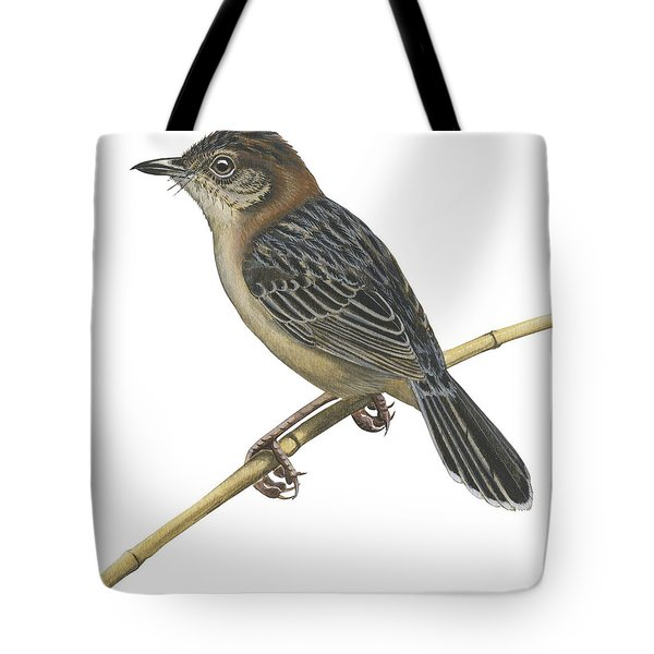 Stout Cisticola Tote Bag by Anonymous