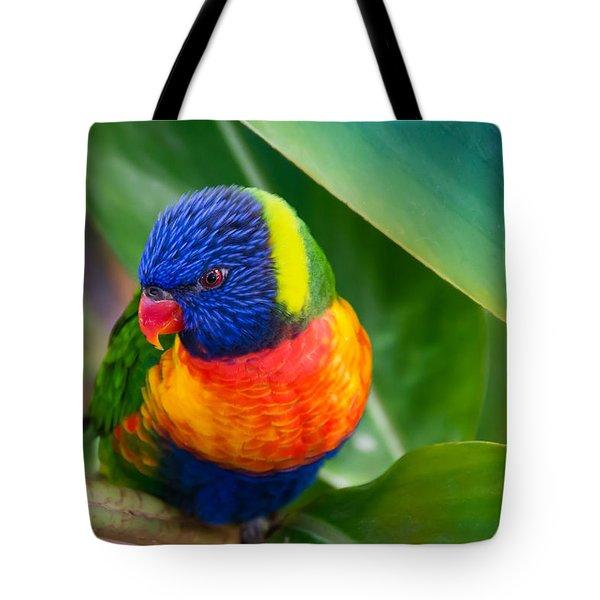 Striking Rainbow Lorakeet Tote Bag by Penny Lisowski