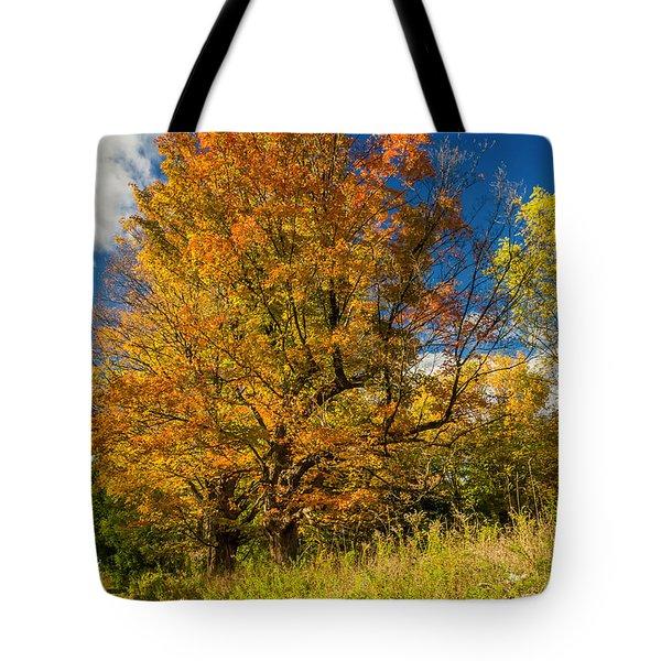 Sugar Maple 3 Tote Bag by Steve Harrington
