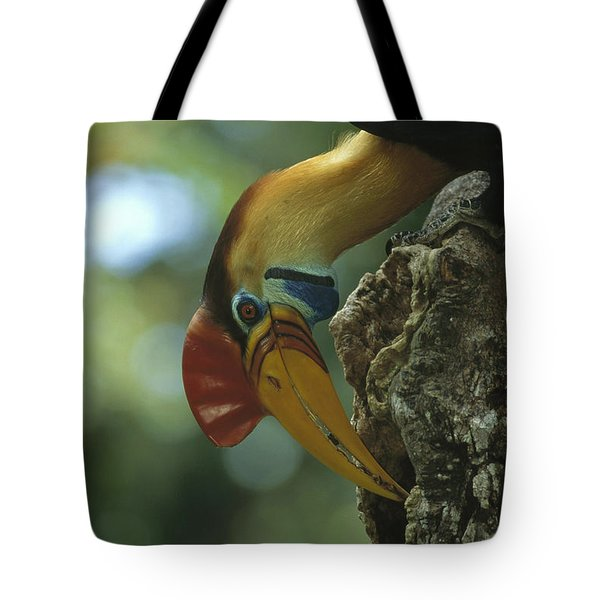Sulawesi Red-knobbed Hornbill Male Tote Bag by Tui De Roy