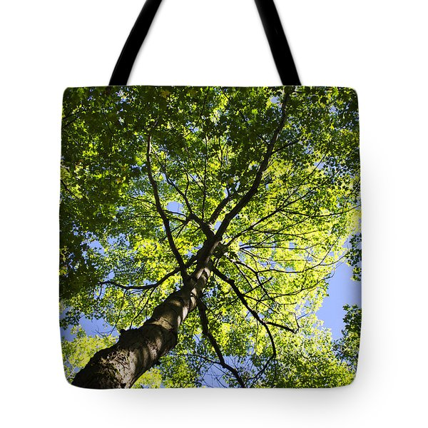 Summer Tree Canopy Landscape Tote Bag by Christina Rollo