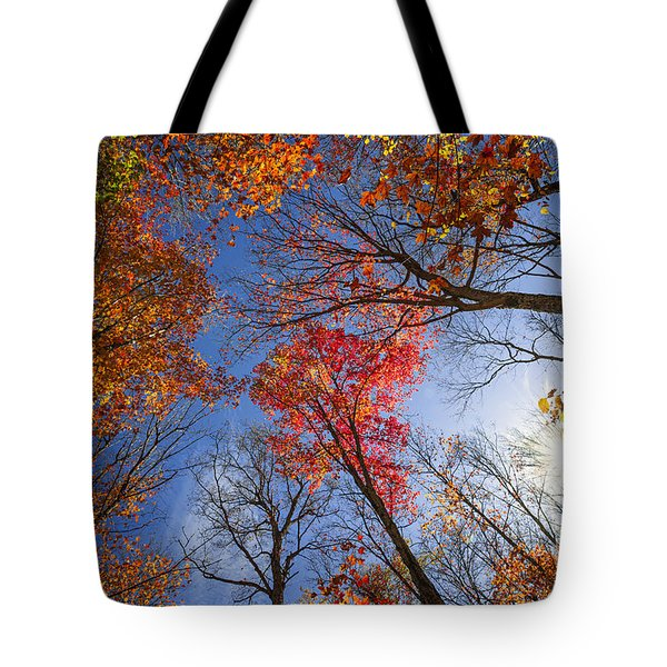 Sun in fall forest canopy  Tote Bag by Elena Elisseeva