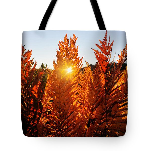 Sun Shining Through Fern Tote Bag by Dan Friend