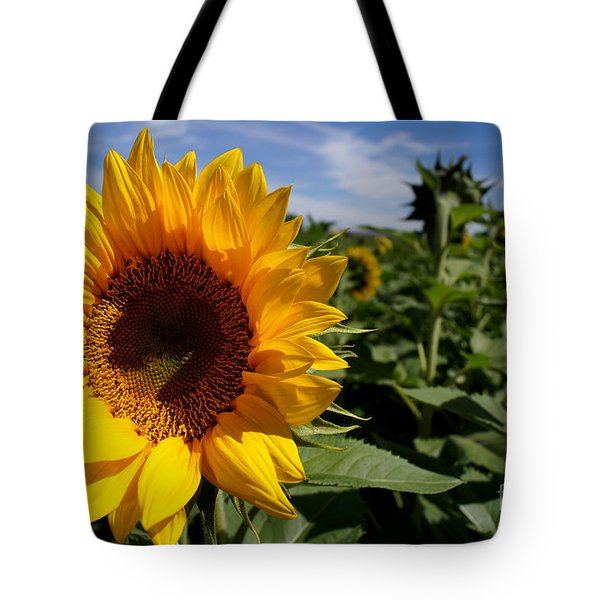 Sunflower Glow Tote Bag by Kerri Mortenson