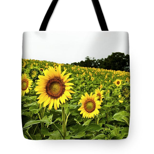 Sunflowers On A Hill Tote Bag by Christi Kraft