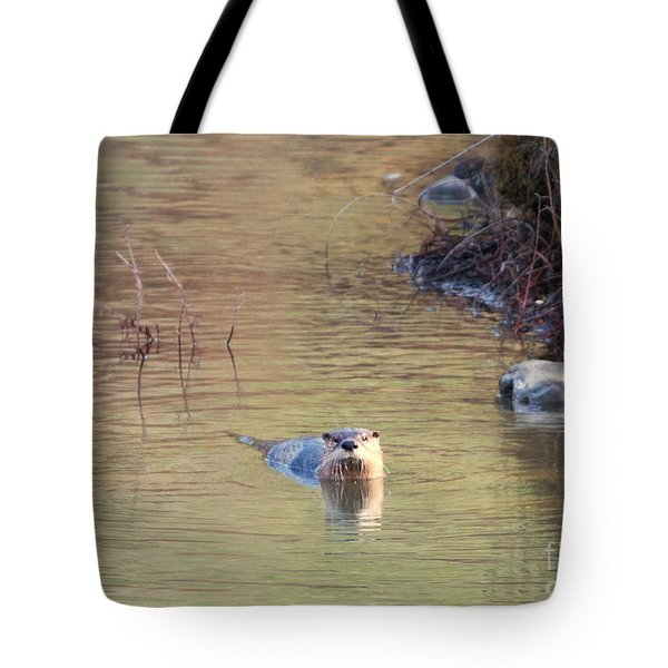 Sunrise Otter Tote Bag by Mike Dawson