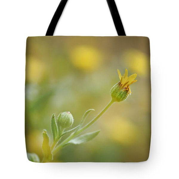 Surrounded Tote Bag by Guido Montanes Castillo