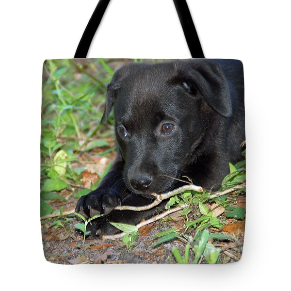 Sweet Puppy Tote Bag by Aimee L Maher Photography and Art Visit ALMGallerydotcom